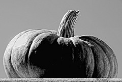 (giuvine eroA) Tags: blackandwhite bw halloween colors vegetables cn colours pumpkins bn colori lupin zucche scarpin ortaggi lpin pinocchi piozzo volpin nikond300 lethlpinballplayer giuvineeroa