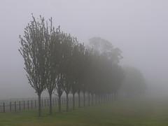THE SHALLOW DEPTH OF THE FIELD (kenny barker) Tags: trees mist fog landscape lumix scotland aberdour scottishlandscape landscapeuk panasoniclumixgf1 welcomeuk kennybarker