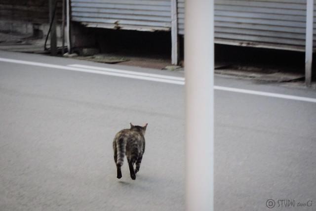 Today's Cat@2013-01-07