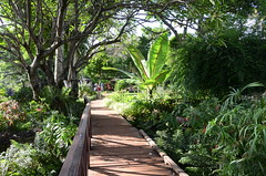 Wooden Walkway (Allison Mickel) Tags: garden tanzania nikon safari greenery pathway gibbsfarm karatu d7000