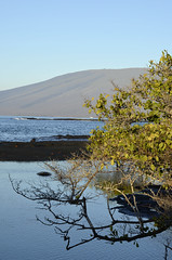 Galapagos - Fernandina Island - View (sweetpeapolly2012) Tags: