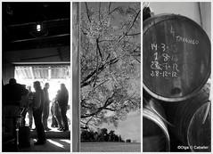 Trasiego (olga sin nick) Tags: blancoynegro luz collage contraluz invierno vino jerez triptico vias trilogia cantarrana trilogias trasiego