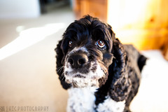 Dumbo-5 (Andrew I. Chang Photography) Tags: dog pet canon dumbo 5d mkii 135mmf2l 2470mmf28l