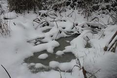 Snow Garden - 11