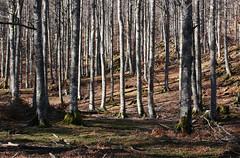 Aralar (marathoniano) Tags: naturaleza art nature rural landscape arte natura paisaje bosque navarra lekunberri aralar marathoniano uhartearakil ramónsobrinotorrens
