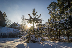 A Sunny Day in Lithuania (AlanScerbakov) Tags: trees winter sun cold season nikon day sunny 1855mm lithuania a d3100 alanscerbakov