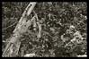 DT01302010 156 (richard.baas) Tags: nature interestingness nikon scenery mood florida conservation professional baas d300 stmarksnationalwildliferefuge richardbaas floridaphotographers conservationphotographers tallahasseephotographers richardbaasphotography richarddanielbaas
