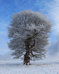 Winter cold (Robstorm Photography) Tags: old uk winter england snow cold tree castle art beauty landscape photography frost fineart chirk lone twisted winterscape 2013 robstorm