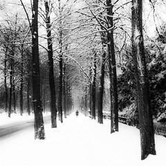 Winterballett (kokorage) Tags: city schnee trees winter people urban blackandwhite snow nature monochrome square menschen squareformat promenade bume mnster rememberthatmomentlevel1 rememberthatmomentlevel2 rememberthatmomentlevel3 kokorage winterballett