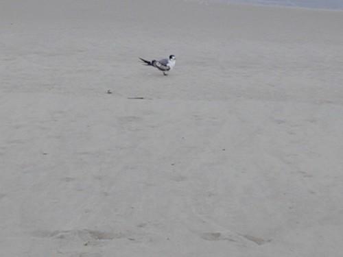 Beach Gold Coast - 25