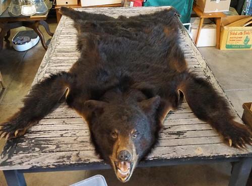 Bear Rug w/ Head ($291.20)
