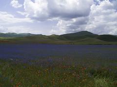 _1103472-1 (francescochirdo) Tags: castelluccio paesaggio campo