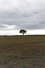 Between two worlds (oskaybatur) Tags: trkiye turkey turkei 2016 oskaybatur tree alone pentaxk10d pentax pentaxart justpentax sky clouds landscape summer august erkezky trakya smcpentaxda50mmf18