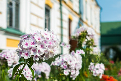 _DSC0830 (mgarin73) Tags: kievpechersklavra kyiv ukraine flowers  kyivcity ua