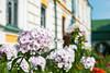 _DSC0830 (mgarin73) Tags: kievpechersklavra kyiv ukraine flowers україна kyivcity ua