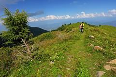 Miranjani: Summit meadows (Shahid Durrani) Tags: miranjani nathiagali hike