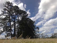 Farm work (Joshua Cas) Tags: farm newzealand waitakere westauckland trees nature grass dry sun clouds sol nokian95 handphone