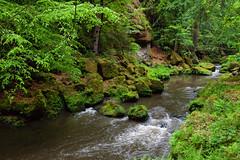 160524_164211_AB_4621 (aud.watson) Tags: europe czechrepublic bohemia decindistrict hrenska riverkamenice kamenicegorge edmundgorge gorge ravine river water rocks rockformation cliffs