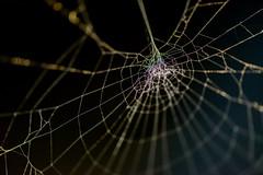A Spiders little Galaxy (G_Albrecht) Tags: insect insekt spinne spinnennetz tier umwelt