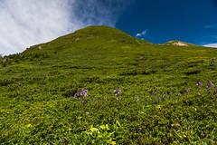 Mt. Odake (hirorin2013) Tags:          aomori hostarectifolianakai mountdake mountain flower    jp