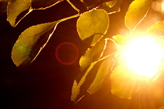 Golden Hour (AlisAquilae) Tags: sunset golden hour sun sunburst light flare sunflare leaves tree branches forest woods nature walk horace mann quote gold beautiful canon canont1i