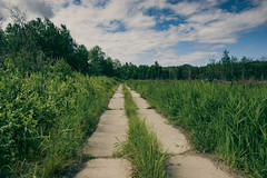 (gwilwering) Tags: forest grass green landscape meadow nature outdoor rain road sky trees          tyumen siberia   sonya350