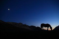 About a horse and the moon (Robyn Hooz) Tags: moon luna horse cavallo blu blue lavaredo mountains tramonto sunset silhouette profilo aria montagna italy