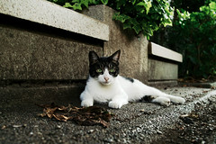neko-neko1489 (kuro-gin) Tags: cat cats animal japan snap street straycat  sigma dp2