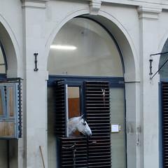 Pferd am Fenster, Hofburg, Wien (mcorreiacampos) Tags: wien sterreich vienna austria pferd cavalo fenster hofburg architektur nurderschnheitwegen youshouldbettereatarchitecture