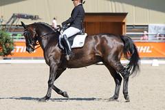 IMG_7551 (dreiwn) Tags: dressage dressur dressuur pferd reitturnier turnierreiten pferdesport horse horseback horseriding equestrian reitverein dressurprfung kandare doublebridle reiten pferde reitplatz ridingarena