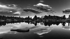 Bear Tooth Sunset 3.0 (Jack Lefor) Tags: lake water clouds sunset trees silhouette landscape scenic nature blackandwhite nikon nikond810 wyoming fineart reflections monochrome serene