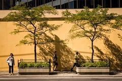 Odds and Evens (Canadapt) Tags: men woman pedestrians trees sidewalk wall shadow street toronto canadapt gregorycrewdson