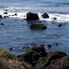Elephant Seals and Sea Lions (Franklyn W) Tags: biketour bikecamping bikeride touring touringbike california pacificcoasthighway hwy1 cahwy1 bigsur kirkcreek sansimeon cambria cayucos morobay morobaystatepark pacificocean marinemammals sealions elephantseals