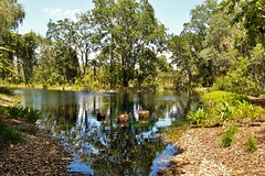 Many drops make a bucket, many buckets make a pond, many ponds make a lake, and many lakes make an ocean. (aCleary26) Tags: bok tower lakewales lake walesflorida wales fl florida central polk county gardens singing pond fish squirrels birds quotation quote pic landscape nikon d3200