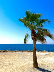 Palm tree alone by the sea, Side, Turkey (tallsmilesdown) Tags: holiday beauty sideoldtown iphotography iphone iphonese shadesofblue sea tree loantree bluesky sunshine summer turkey side