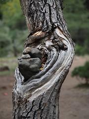 Mani stones in the hollow (claying) Tags: olympus em5 panasonic lumixgvario100300mmf4056megaois china   tibet     midui glacier bom nyingchi mani stone