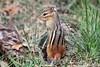 On Guard (Peggy Collins) Tags: cute stripes guard chipmunk chipper guarding chipmunks vigilant cuteanimal peggycollins