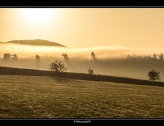 Golden Morning (bernd obervossbeck) Tags: morning trees fog landscape morninglight nebel landschaft bume morgen sauerland goldenlight morgenlicht landscapephotography landschaftsfotografie goldeneslicht canoneos60d mygearandme mygearandmepremium mygearandmebronze mygearandmesilver mygearandmegold mygearandmeplatinum