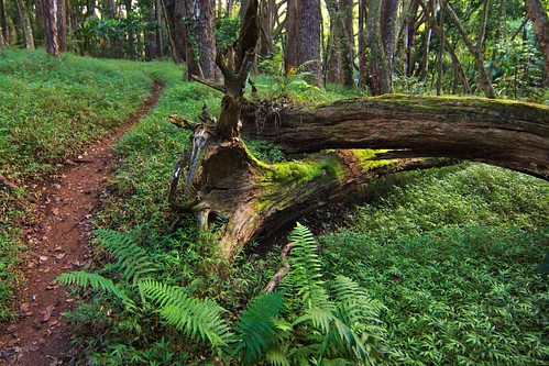 Path to Ho'opi'i Falls