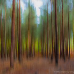 autumn in the woods.. (2 of 3) (markhortonphotography) Tags: autumn motion blur colour tree fall canon woods surrey 7d trunk icm deepcut surreyheath autumncolour intentionalcameramovement eos7d verticalpanning 1585mm