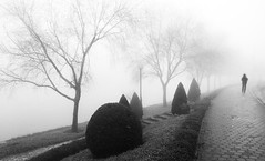 Into the Fog (fran-taylor) Tags: park travel autumn trees winter blackandwhite weather misty fog nikon topiary streetlamp path foggy monotone vietnam walker sapa damp explored d80