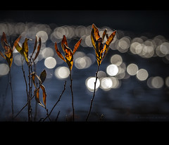autumn bokeh (marianna armata) Tags: autumn light reflection fall nature water leaves sparkles leaf bokeh ripples upclose mariannaarmata