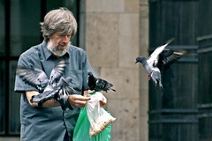 birds beard flying feeding russia moscow pigeons attack oldman seeds rats nofear generosity