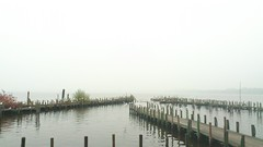 gulls in the mist (Rona's whereabouts) Tags: autumn sea seagulls mist lake water weather birds fog coast pier october gloomy harbour shore ammerland zwischenahn