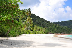The beach (Environmental Artist) Tags: ocean sun hot green nature water coral island sand asia coconut peaceful palm clear exotic jungle malaysia serene waste lush recycling pure tropics climate tranquil redang reefs equator sustainability pristine digitalcameraclub