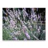 (∙ мake it ғuиky ∙) Tags: flowers summer italy holiday 120 film mediumformat garden scanner scan parma velvia100 psd 6x45 medio mamiya645 2012 diapositiva diapositive formato cs4 pellicola valmadrera g4010 morrolo