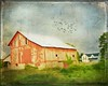 Red Barn (Passion4Nature) Tags: red birds farmhouse barn rural michigan flock upnorth ie pastoral moonseclipse magicunicornverybest magicunicornmasterpiece magicuniversemasterpieces textureinfinitebook moonseclipsehighlights