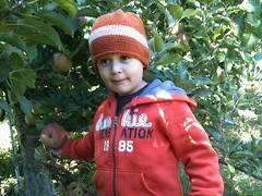 Brecknock Orchard