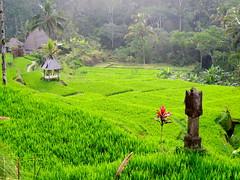 Bali - 342