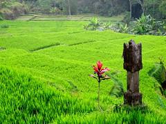 Bali - 343